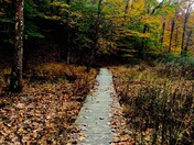 A Hike in the Fall