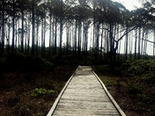 Into the Forests of St. George Island State Park
