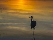 Standing on on leg at sunset