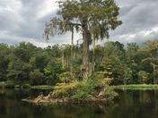 Beauty in Wakulla Springs