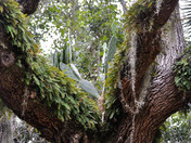 Oak Tree Cactus Pot