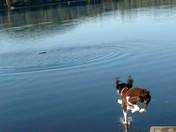 Eager morning swim