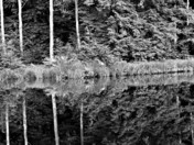Reflections, which way is up B/W