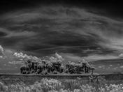 Prairie Hammock