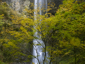 Autumn at Silver Creek Falls