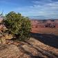 Bonsai and Dead Horse Canyon