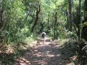 Follow the leaf strewn road!
