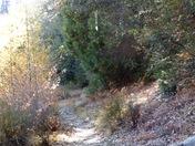 Palomar path