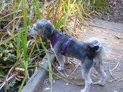 Petunia at Palomar