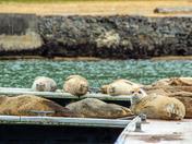Ayala Cove Sunbathers