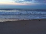 Sea Turtles and Sunrise