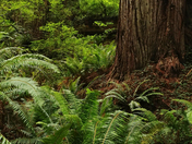 Trillium Falls Trail Redwood State Park