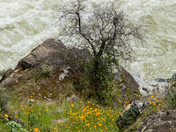 Spring at South Yuba River State Park