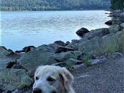 Dog day at Devil's Lake Wisc.