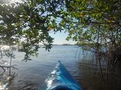 Sun glistening thru mangroves