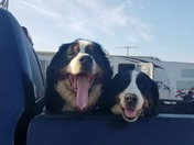 Big Dogs Happy To Cruise the Campground