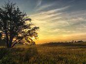 The Oak Tree in the Meadow