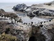 March of the Cormorants
