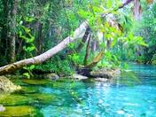 Three Sisters Springs in Crystal River, FL