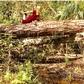 Big Tree yoga