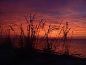Sea-oat Sundown