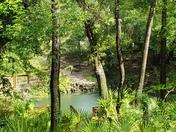 Serenity in Springs