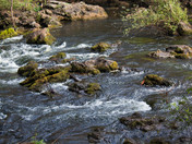 Rapids of Hillsborough River