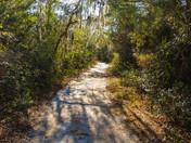 Morning walk through the woods