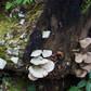 Fungus fun