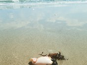 Stone Crab Vacation