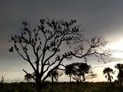Roosting at sundown