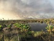 A Fiery Marsh