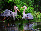 Blue Heron Partners
