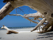 Under the Driftwood