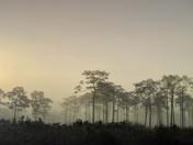 Myakka Sunrise
