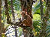 """""""The Monkeys of Silver Springs V"""""""