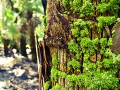 Some Moss on a Tree!