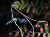 Dragonfly at Lake Griffin
