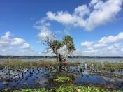 Big Flats Marsh