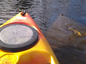 Manatee and Kayak