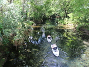 Silver Springs State Park - Kayaking