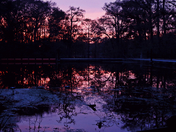 Sunset at Fanning Springs