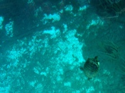 View from the Glass Bottom boat