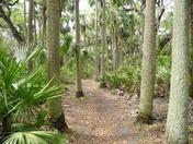 Palm trail