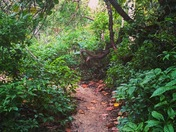 Gnarly Wood Trail