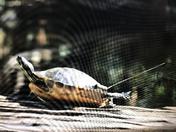 High Tech Turtle