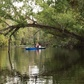 Tree-framed kayakers