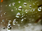 Water Droplets after a rainy day