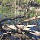 Wood Gator