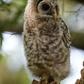 Baby Owl on Nest